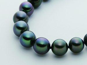 そろそろ、黒蝶真珠へ買い替えをお考えの方