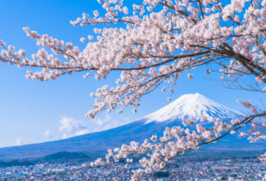 【静岡市】大人気の桜柄の結婚指輪!春に入籍するから絶対入れたい桜デザイン!