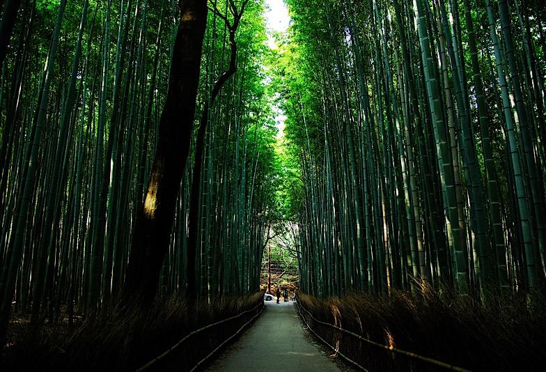 京都を連想させる竹林の歩道