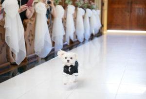 【静岡市】愛犬家におすすめ!ペットと一緒に結婚式ができる会場!
