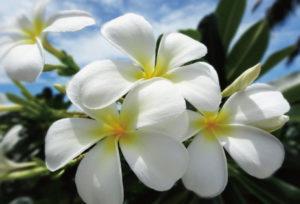 【浜松市】今大人気のハワイアンジュエリーのひとつ、「ハートアイランド」とは?