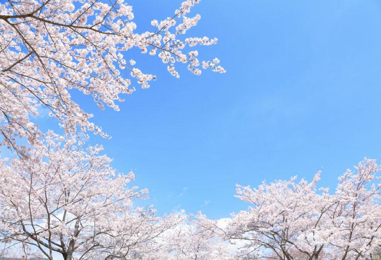 【兵庫県・加古川市】日本の風情を感じられる和ブランド特集!