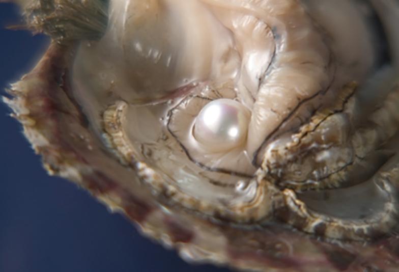 【福岡県久留米市】養殖真珠と天然真珠って何が違うの?