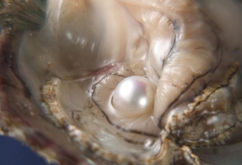 【静岡市】調色真珠VS無調色真珠 一体何が違うの?